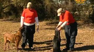 Devoted Canine Heroes: K-9 Search And Rescue Of Texas