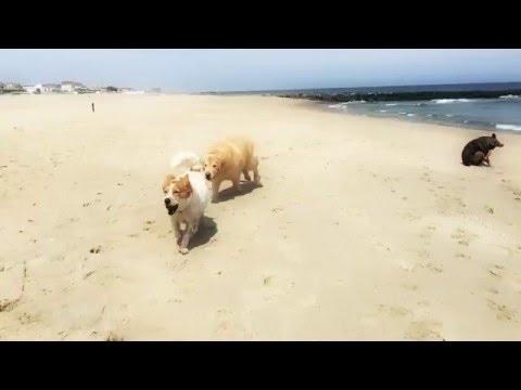 Big T & Dewey at Asbury Park Dog Run Beach