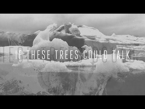 """If These Trees Could Talk """"Solstice"""" (OFFICIAL)"""