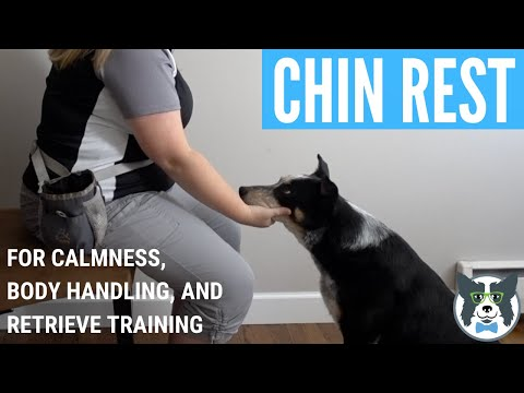 Chin Rest: Foundation for Cooperative Care and QuietMouth Retrieve Behavior