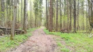 Ужасы в лесу