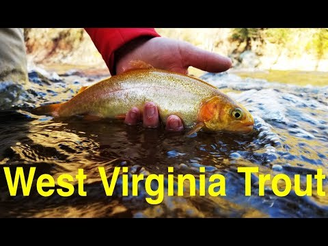 West Virginia Trout Fishing