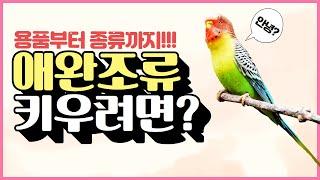 애완조류 키우는 방법! feat. 앵무새 키우기