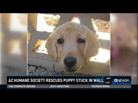 12 News: Puppy freed from cement fence in yard