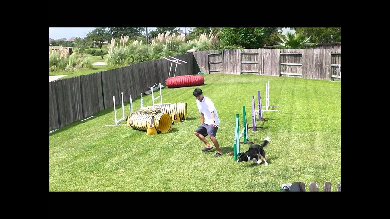 Using A Double Rear Cross Instead Of A Serpentine In Dog