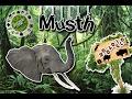 Musth  El Periodo más peligro en los elefantes  (Zoologíco virtual)  ¿Sabias Que? 