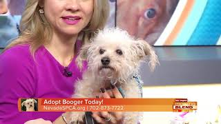 This Week's Pick Of The Litter: Booger
