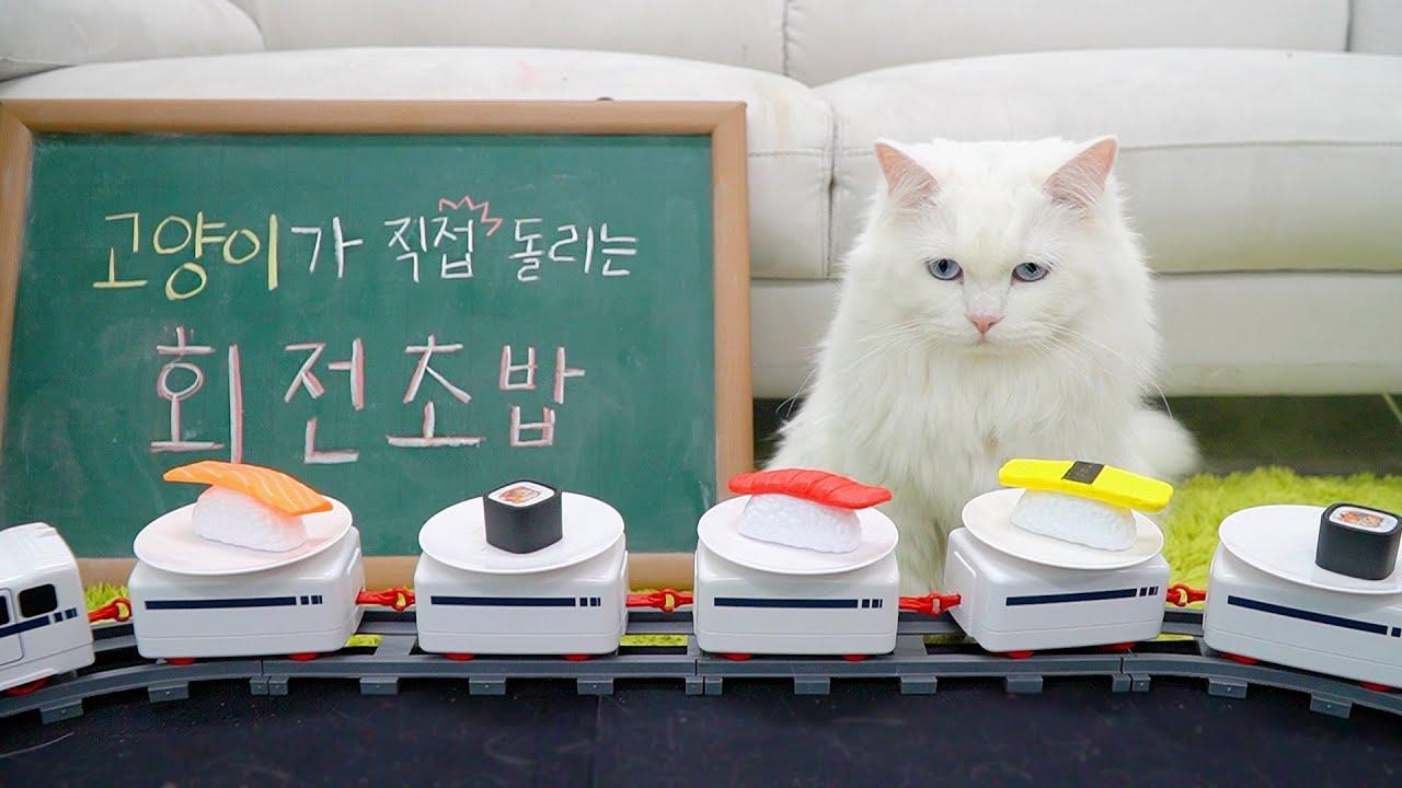 고양이용 회전초밥 | 고양이산책