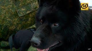 Служебное собаководство в белорусской армии