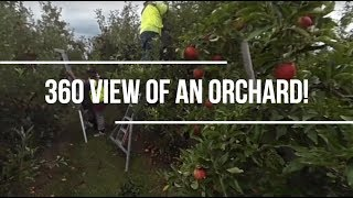 360 view of an orchard!