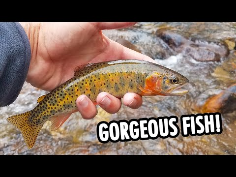 Small Streams Don't Get Much Better Than This! (Tenkara Fly Fishing)