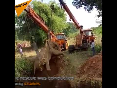 Elephant Trapped in Well Rescued in India