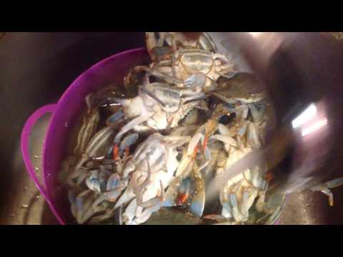 CRABS! How to clean them before cooking.🦀