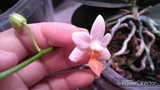 Обзор орхидей после отпуска. 🤩🤩🤩