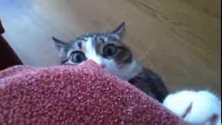 Кот в шоке, шок в коте, оба в ахуе )