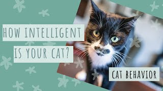 How to Test your Cats' Intelligence  Cat Social Cognition