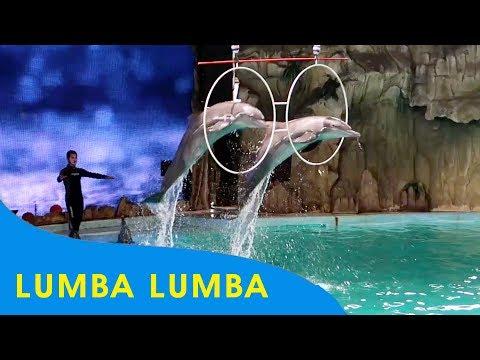 Atraksi Lumba Lumba Ancol ❤ Ocean Dream Samudra Ancol