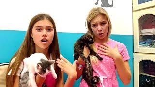 Nastya aprende a cuidar de seu cachorrinho, uma história instrutiva