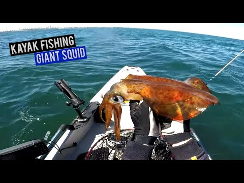Catching Squid | Kayak Fishing For GIANT Squid In Shallow Waters