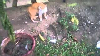 vuclip sex kucing and anjing