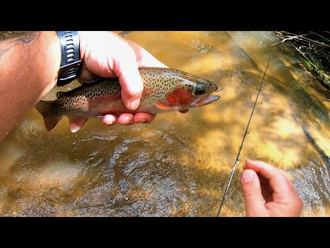 Trout Fishing When Actions Speak Louder Than Words