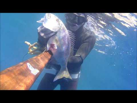samos spearfishing dentex