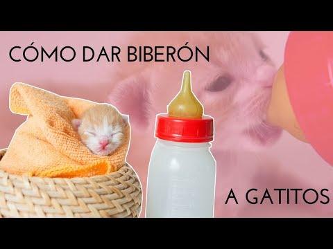 CÓMO DAR BIBERÓN A UN GATITO | Gato recién nacido o gato lactante