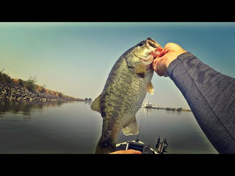 CA Delta Little Connection Slough Bass Fishing