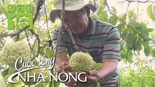 Trồng na quả to khổng lồ, dân Sơn La đổi đời | CSNN 460 | VTC16