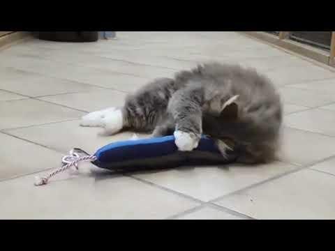 Katteleg.com - Kæmpe