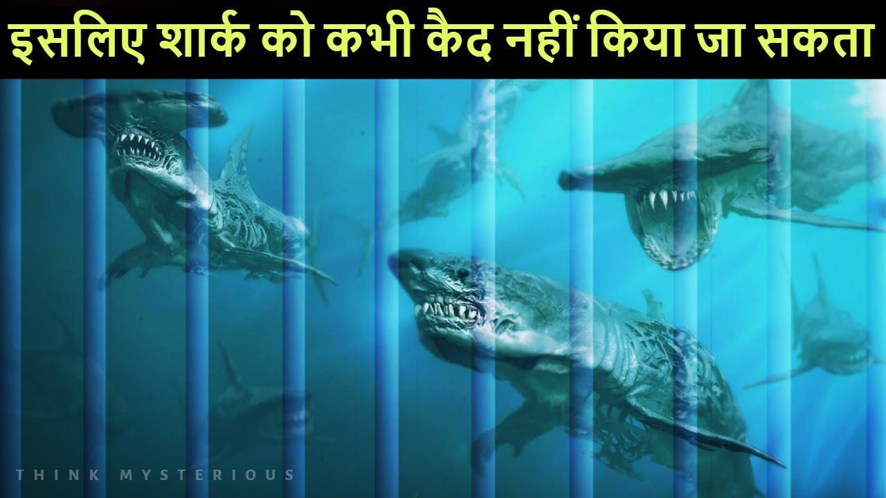 ऐसे जानवर जो इंसानो के पहुँच के बाहर है | Animals we will never see at zoos and aquariums.