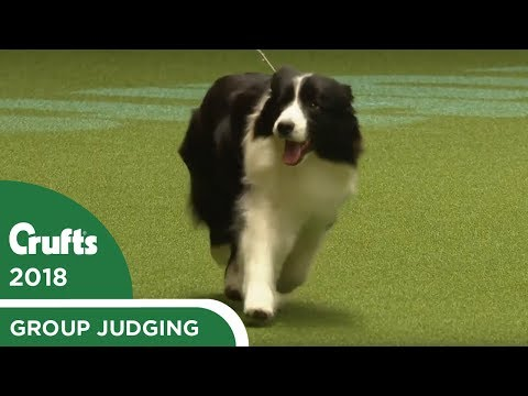 Pastoral Group Judging | Crufts 2018