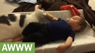 Cat diligently takes care of babysitting duties thumbnail