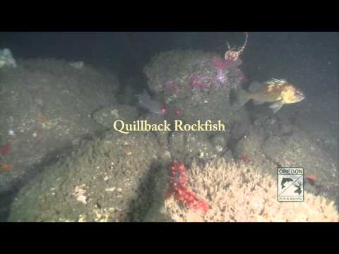 Nearshore Rocky Reef Select Fish Species