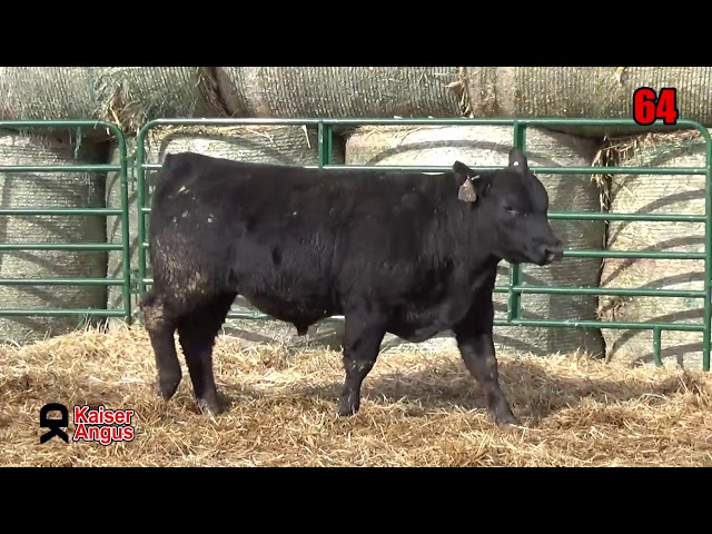 Kaiser Angus Ranch Lot 64