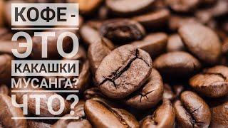 Топ 5 фактов о кофе