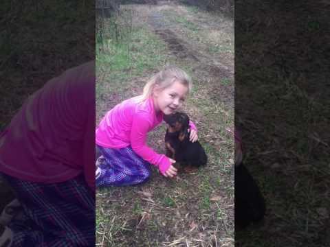 PuppyFinder.com : AKC Bloodhound Pups