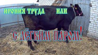 Моем корову.Как справиться с загрязнениями на шерсти у коровы.