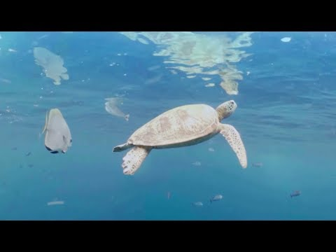 Swim underwater with a Turtle! 360 video | Earth Unplugged