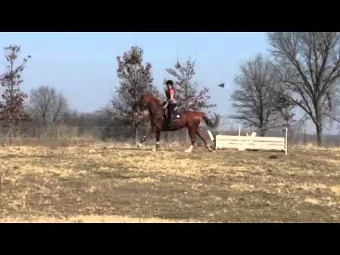 Versailles XC Schooling BN with new eventing junior
