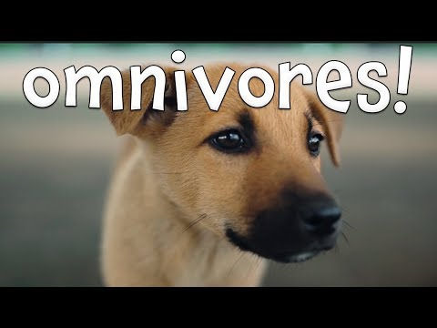 Omnivores! Learning Omnivore Animals For Kids