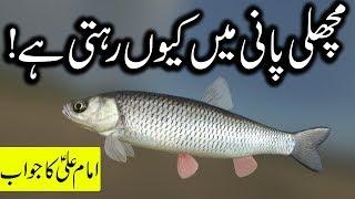 Machli Pani Main Kyo Rehti Hai Hazrat Imam Ali as Ka Jawab | Fish in Water | Mehrban Ali