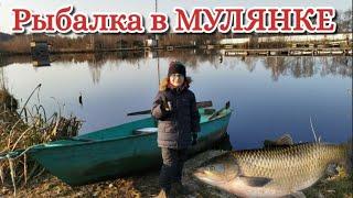 Рыбалка в Мулянке Большая рыба Толстолобик Платный водоем в Екатеринбурге спининг TEAM DUBNA