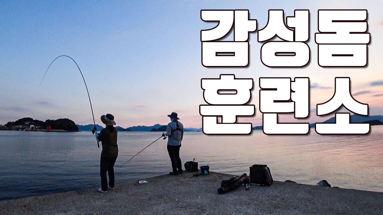 [다리tv] 고등어 낚으러 갔다가 감성돔만!!!  너무 잡기 쉬운 여름 감성돔!!!