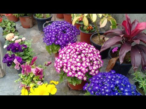 Best 5 Heavy Flowering Plants For Winter Garden || Balcony Flowering Plants 2020