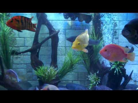 Monster Aquarium 1100 Gallon Filtration Tour