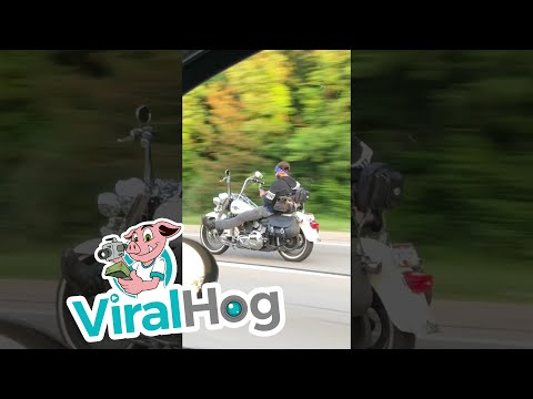 No Hands at Highway Speed || ViralHog