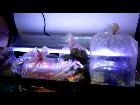 Tropical Fish Haul: 35 New Fish From Petco, PetSmart, And LFS