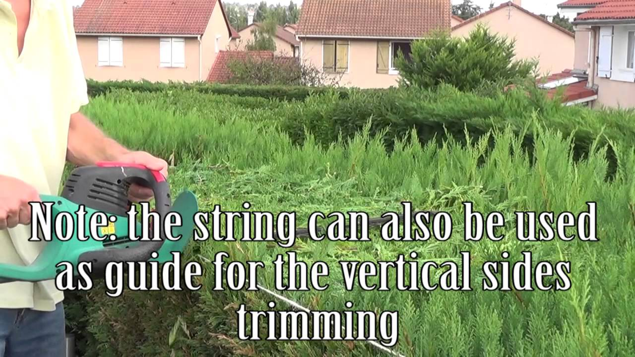 Uncategorized Hedge Trim how to trimcut a hedge straight youtube