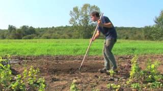 Vegetable Gardening : Raised Bed Gardening Tips